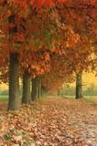 Sentiero di campagna  in autunno - Campaign path in autumn poster