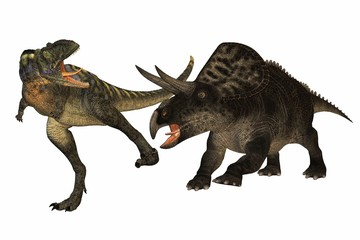 dinosaur aucasaurus contre zuniceratops