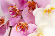 beautiful orchids, close up