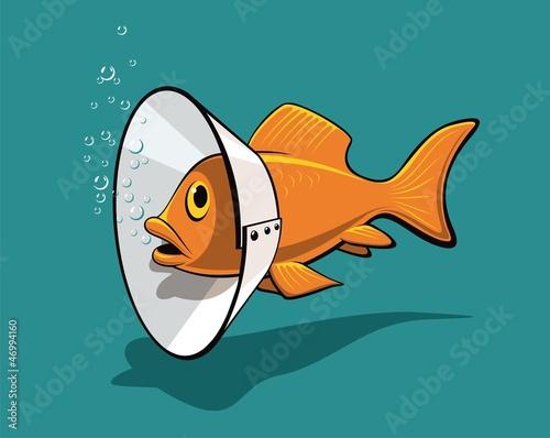 Fish collar