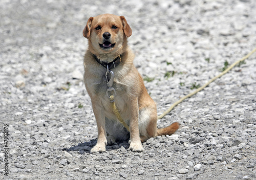 Cute Guard Dog