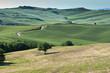 verde dei prati in Toscana