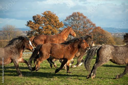 Fototapeten,herd,pony,walflosse,vollblüte