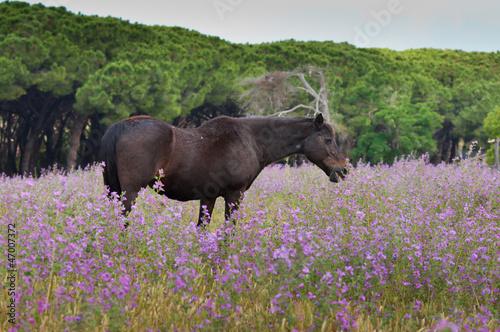 cavallo in un prato fiorito