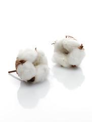 2 Baumwollblüten