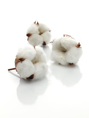 3 Baumwollblüten