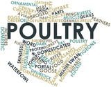 Word cloud for Poultry