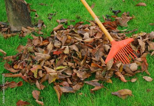 ramassage de feuilles mortes en automne