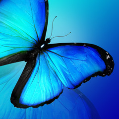 Blue butterfly on blue background