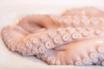 fresh raw octopus