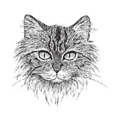 Tabby Cat Portrait - 47020305