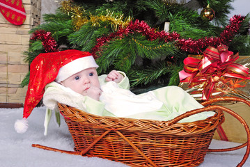 Small breast child in basket near new year's fir tree