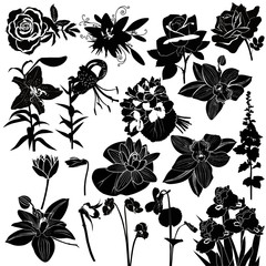 vector collection of flowers isolated