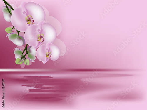 Fototapeten,orchidee,abbildung,blume,natur