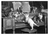 Fototapety Kittens - Chatons - Kätzchen