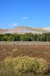 Busch, Gras, Bäume und farbiger Hügel