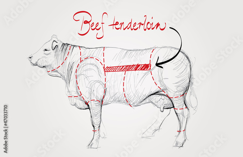 Beef tenderloin / Cuts of cow
