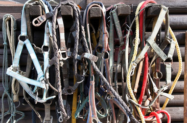 Details of diversity used horse reins
