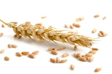 Einzelne Weizenähre und Körner