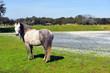 Viejo caballo en el campo