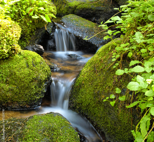 Papiers peints Cascades Mountain stream among the mossy stones