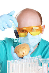 Scientist injecting GMO into the potato
