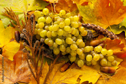 white grapes and acorns