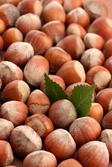 tasty  hazelnuts with leaves, close up