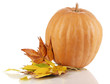Ripe orange pumpkin yellow autumn leaves isolated on white