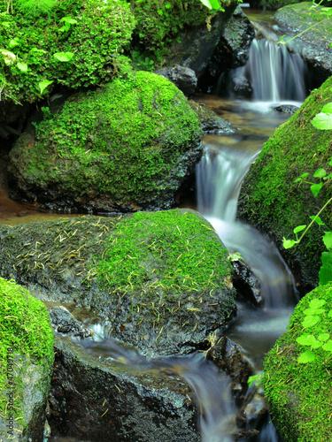Fototapeten,strömen,cascade,fallen,wald