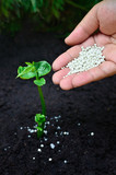 Close up of fertilizing a young plant