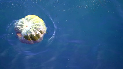 Polluted Sea Surface, Floating pumpkin