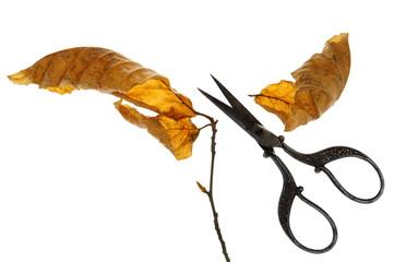 Herbst, die Blätter fallen