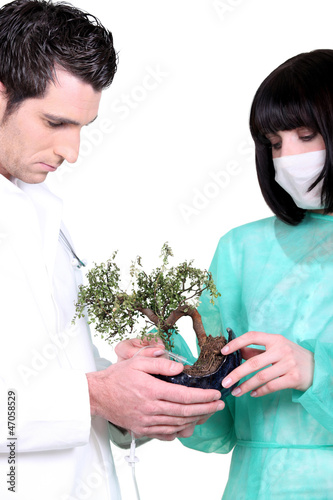 Two doctor with banzai tree