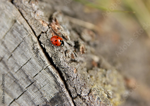 Ladybird crawling to somewhere