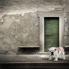 cane solitario sul marciapiede
