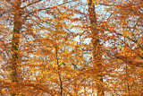 Autumn leafs of trees in forest.