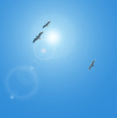 Realistic vector sun and seagulls with lenses flare. No mesh.