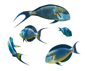 Tropical fish collection on white background