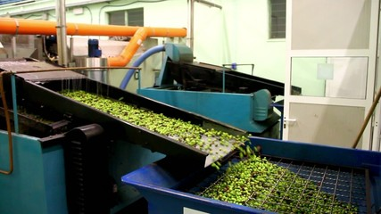 Frangitura olive