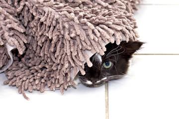 Kitten hiding under carpet
