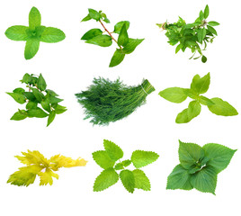 eight types of  spicy mint