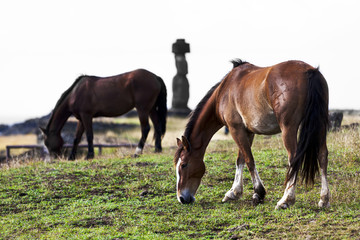 Two horses grazing in frotn of a moai in Easter Island