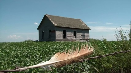 Feather in Barbwire - Farmhouse Background
