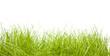 Rasen und Wiese
