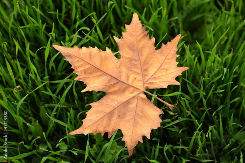 Autumn leaf in macro closeup