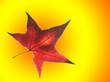 Leinwanddruck Bild - Foglia solare