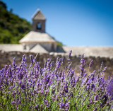 Fototapety Abbaye de Sénanque with lavender field, Provence, France