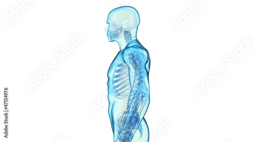 Transparent Human Body on white background, loop rotation