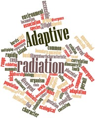 Word cloud for Adaptive radiation